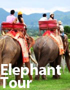 Thai wine tours by Elephant ride through the thailand vineyards