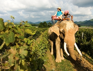 Thailand wine tour by elephant give you create views of the vineyard