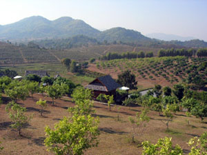 Chiang Rai winery produces world famous fruit wines from fruits grown in Thailand